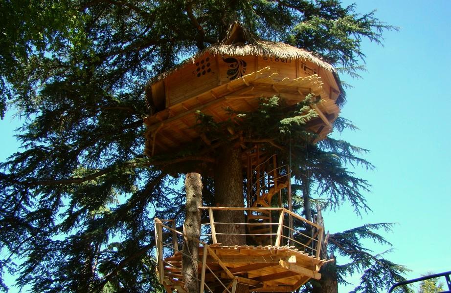 cabane-arbre-cedre