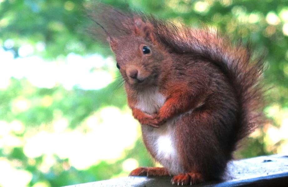 cabane-arbre-ecureuil
